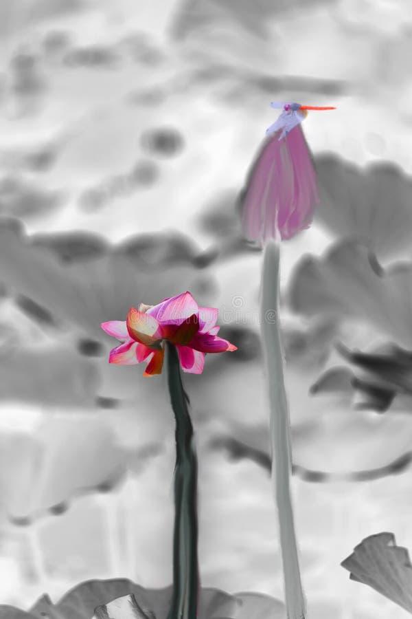 Lotus et libellule photo libre de droits