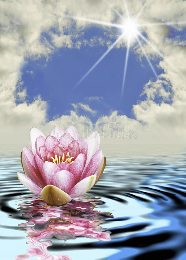 Download The lotus flower stock photo. Image of reflection, background - 15342808