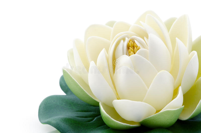 Lotus flower. A white lotus flower with green leaves stock image