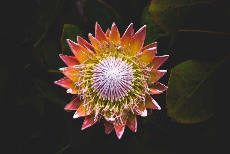 Lotus Flower Free Public Domain Cc0 Image