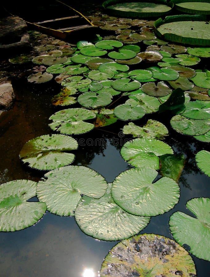 Download Lotus flower stock image. Image of beautiful, colorful - 30899143