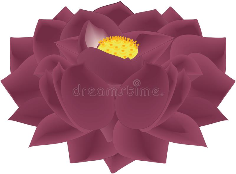 Lotus Flower Black Mauve ilustración del vector