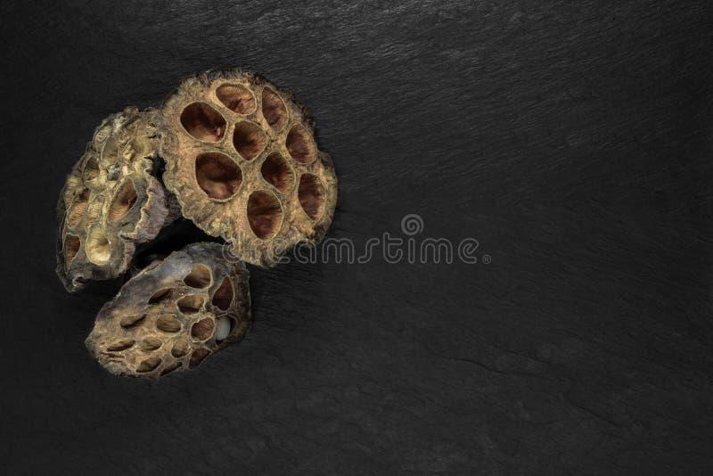 Lotus Flower Blossom seca na superfície de pedra preta do fundo com espaço livre imagens de stock