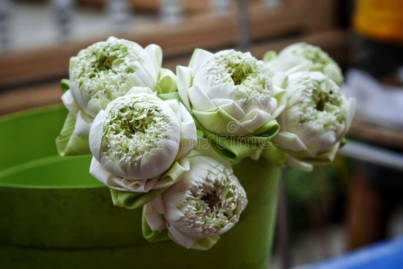 Lotus flower gradens nature tree stock photo