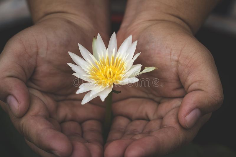 Lotus flower and hand stock photo image of background 97010342 download lotus flower and hand stock photo image of background 97010342 mightylinksfo