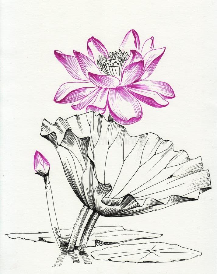Lotus flower line art. Ink pen drawing. Original style stock illustration