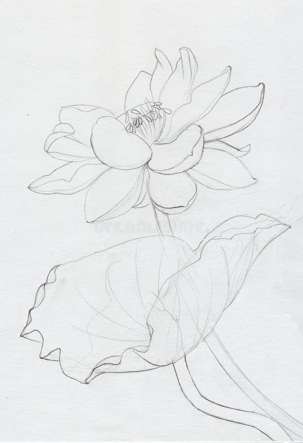 Lotus flower line art. Ink pen drawing. Original style royalty free illustration