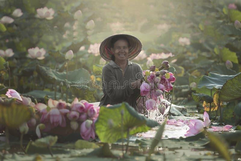 Lotus flower morning time. Woman farmer smiling keeps lotus flower on the lake morning time at Sakon Nakhon,Thailand royalty free stock photography