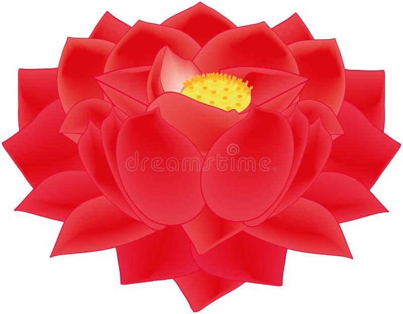 Lotus Flower Red royalty-vrije stock afbeelding