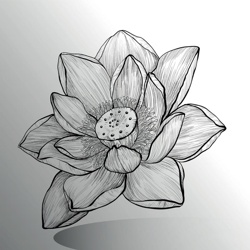 Lotus Flower-schets royalty-vrije illustratie