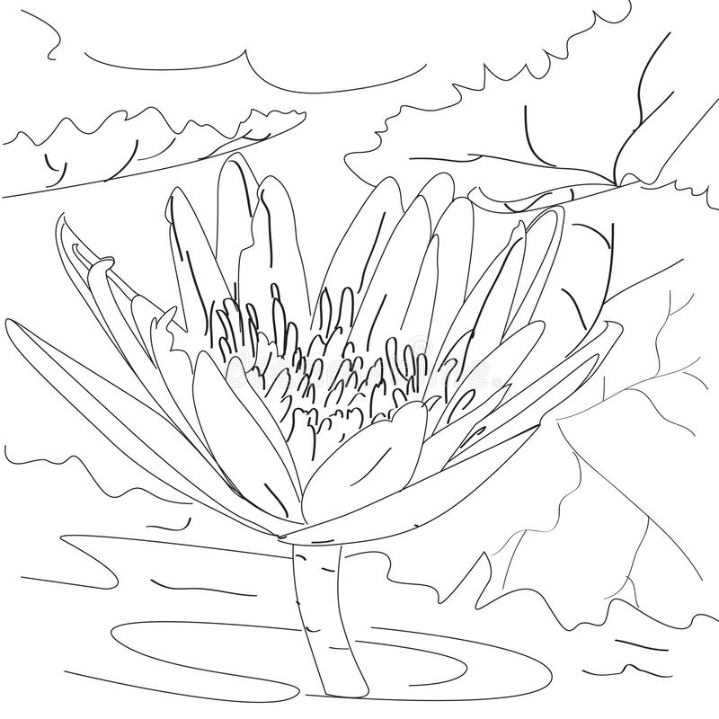 Lotus flower sketch art and nature outline stock illustration download lotus flower sketch art and nature outline stock illustration illustration of bouquet gorgeous mightylinksfo
