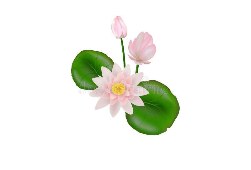 Lotus Flower. Vector