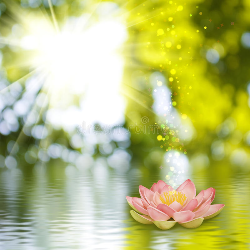 Lotus flower on the water royalty free stock photos