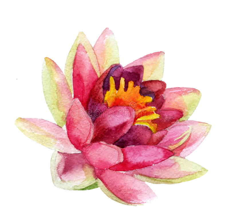 Lotus flower. watercolor royalty free illustration