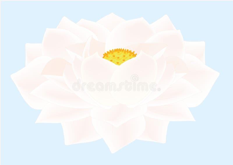 Lotus Flower White stock afbeelding
