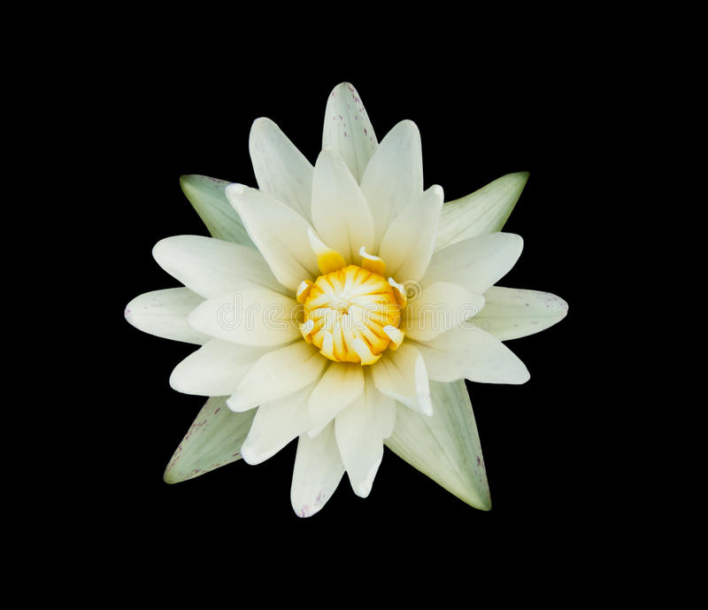Download Lotus Flower stock photo. Image of flora, colorful, meditation - 39505576