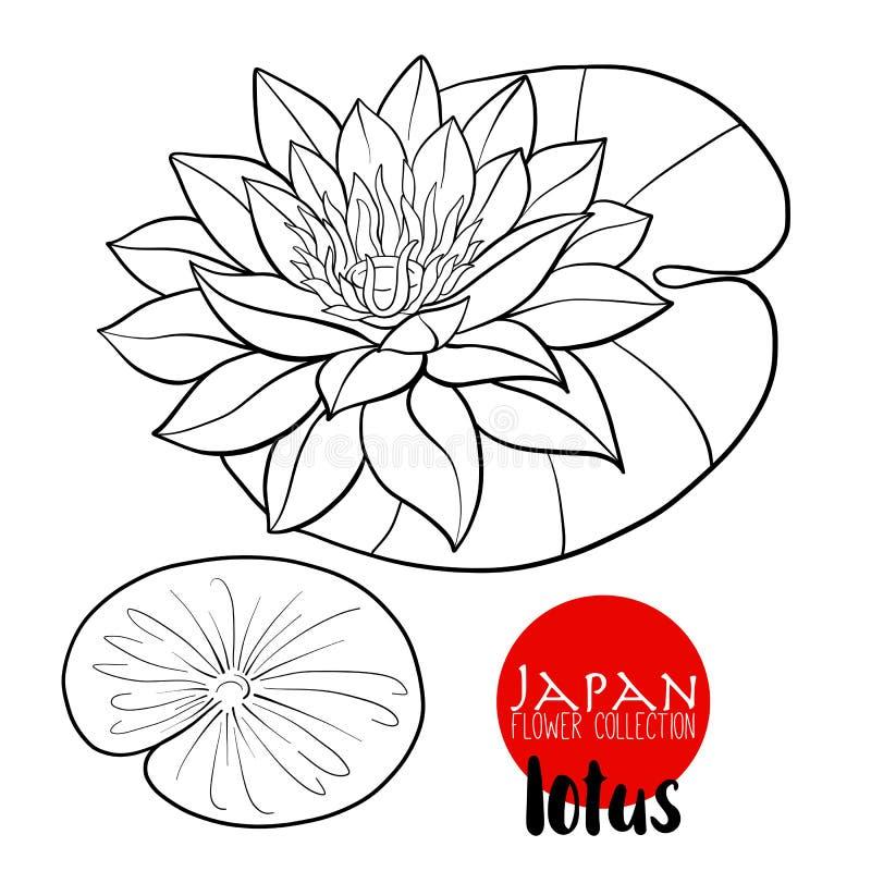 Lotus Flowers Línea común flores botánicas del ejemplo del vector O ilustración del vector