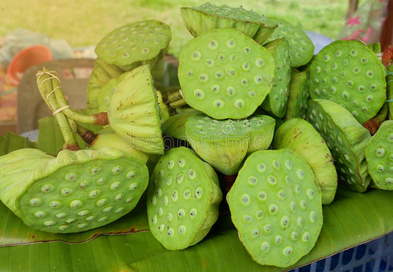 Lotus fruit stock photo image of flower green eating 97563212 download lotus fruit stock photo image of flower green eating 97563212 mightylinksfo