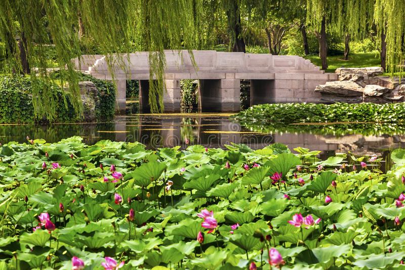 Lotus Garden Reflection Bridge Summer-Palast Peking China stockfotografie