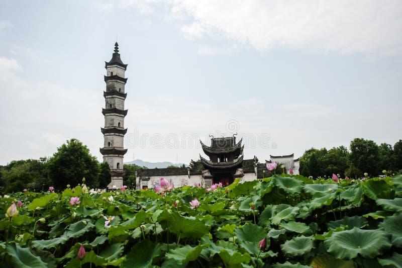 Lotus garden. Lotus and tower in the garden stock photo