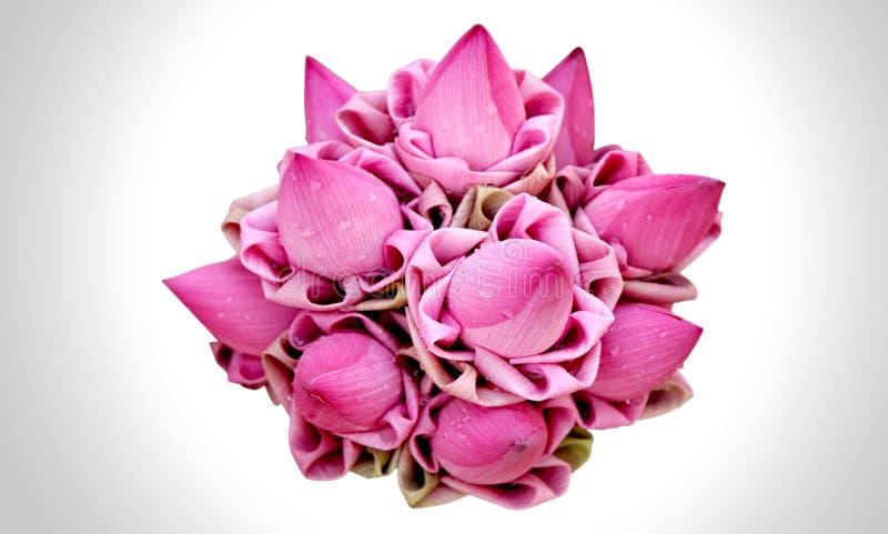 Lotus grupp royaltyfria bilder