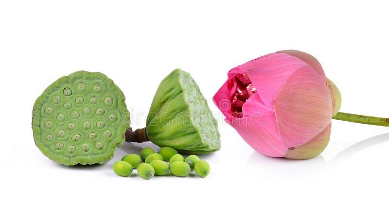 Lotus-het zaad en de roze lotusbloem isoleren witte achtergrond stock fotografie