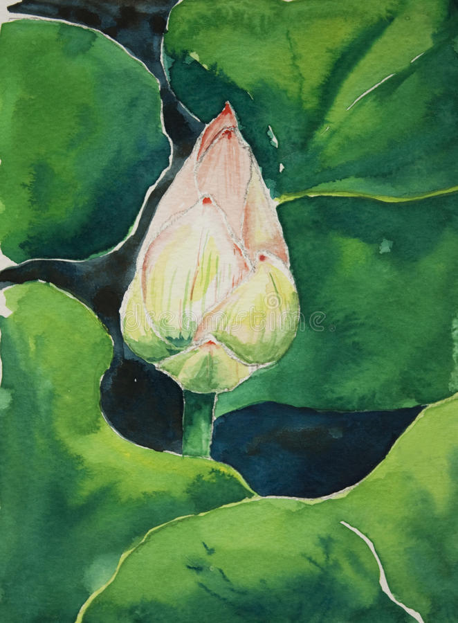 Free Lotus In Watercolor Stock Image - 27098571