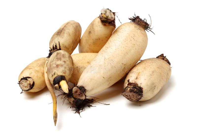 Lotus is a kind of Chinese traditional food, high nutritional value.It Can be eaten raw or cooking,and Chinese medicine believes. Medicinal value of Lotus root stock photo