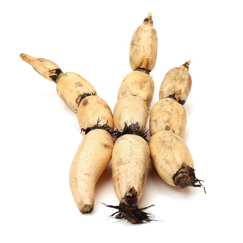 Lotus is a kind of Chinese traditional food, high nutritional value.It Can be eaten raw or cooking,and Chinese medicine believes m. Edicinal value of Lotus root royalty free stock photos
