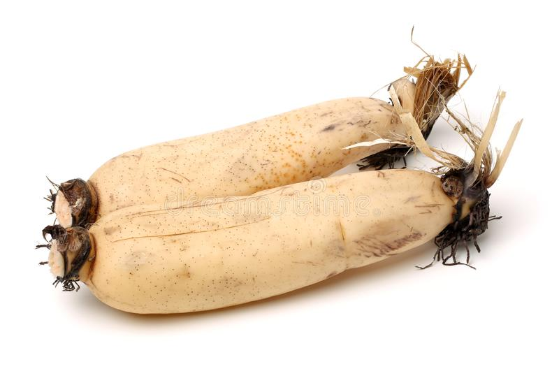 Lotus is a kind of Chinese traditional food, high nutritional value.It Can be eaten raw or cooking,and Chinese medicine believes m. Edicinal value of Lotus root stock images
