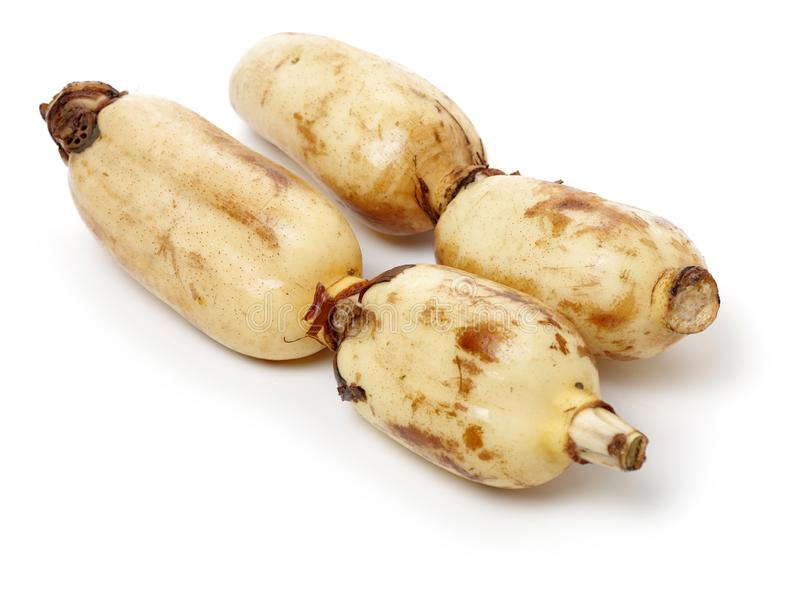Lotus is a kind of Chinese traditional food, high nutritional value.It Can be eaten raw or cooking,and Chinese medicine believes m. Edicinal value of Lotus root stock photography
