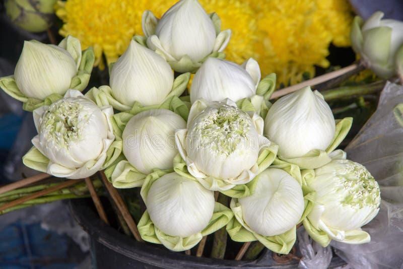 Lotus-knoppen voorbereid zoals aanbiedend, Doi Suthep dichtbij Chiang Mai, Thailand stock afbeelding