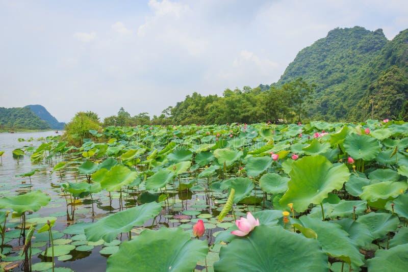 Lotus lake stock images