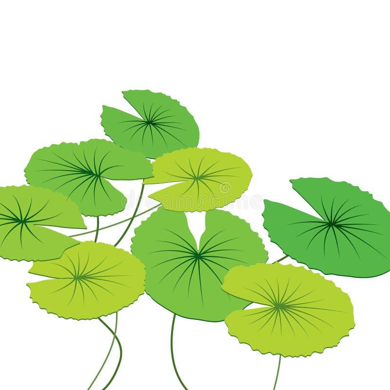 Lotus Leaf stock illustrationer