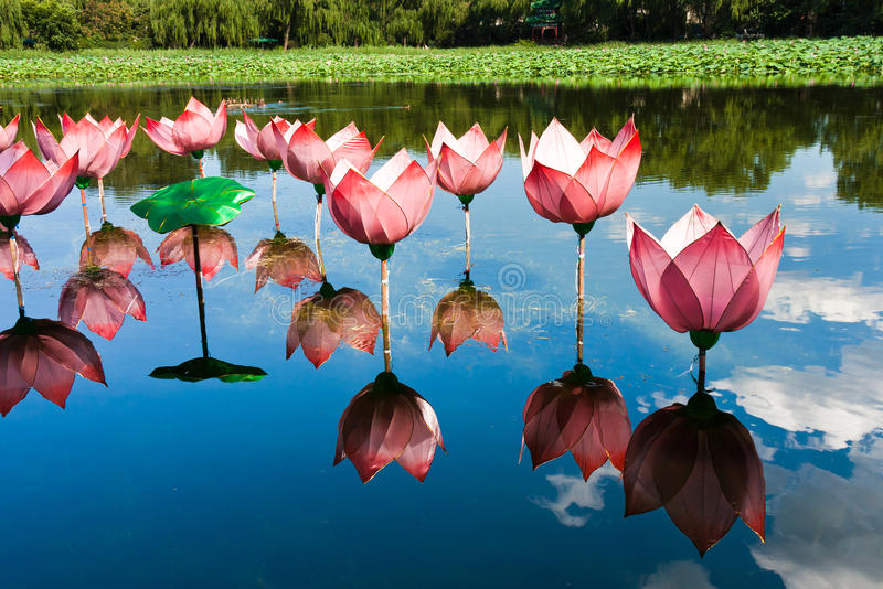 Lotus light in pond royalty free stock photo