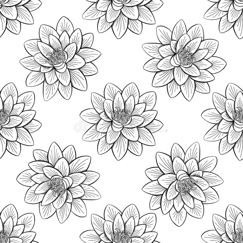 Lotus lily water pattern vector illustration