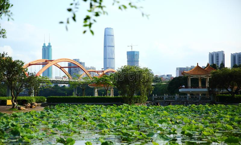 Lotus and Modern Buildings. The view of shenzhen honghu park, China stock photography