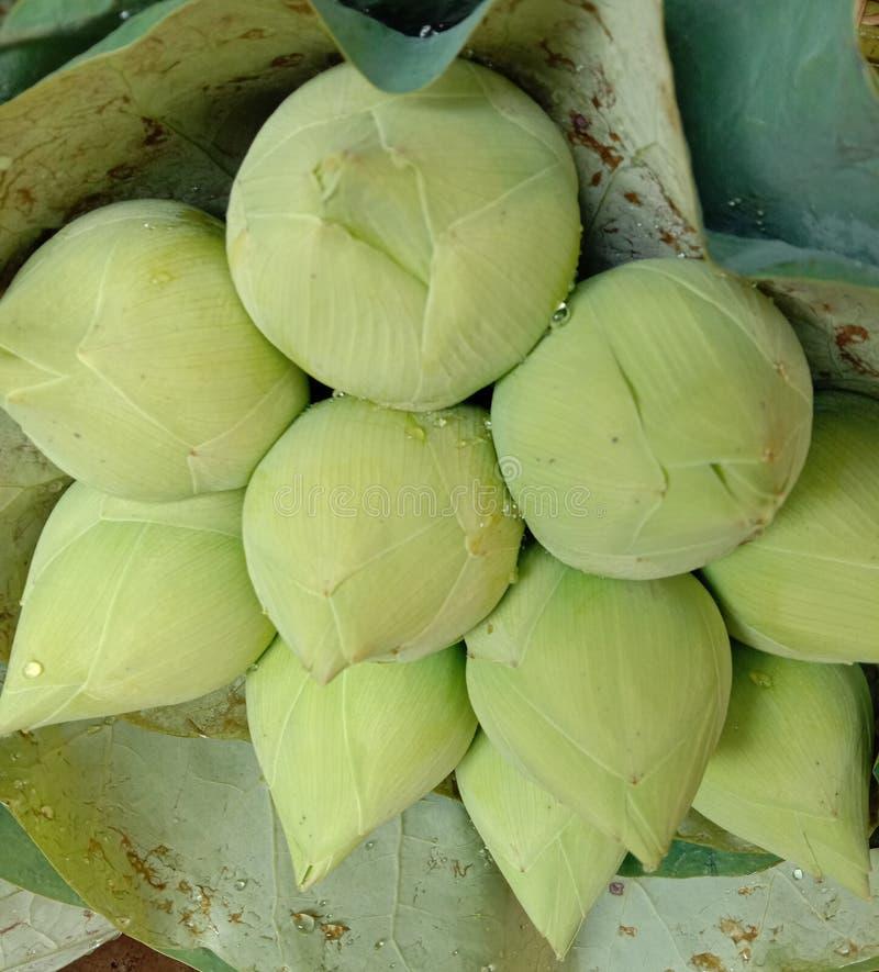 Lotus não florescer no chão de madeira é considerado um símbolo de virtude A crença existe desde a era moderna fotos de stock