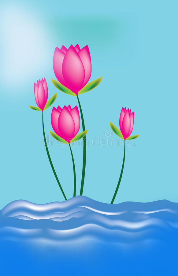 The Lotus royalty free stock image