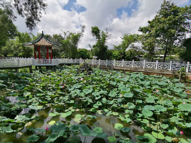 Lotus och paviljong på Wun Chuen Sin Kwoon i Fanling Hong Kong royaltyfri bild