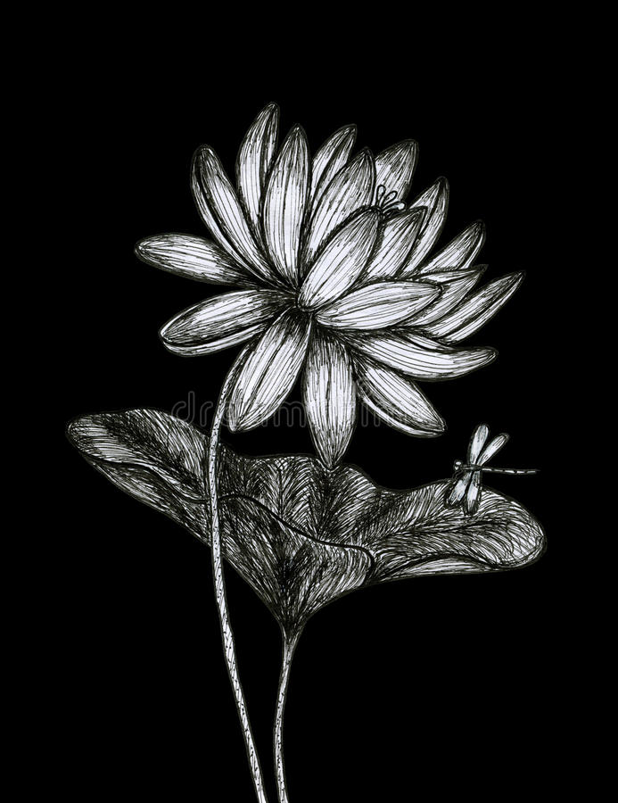 Lotus op de zwarte achtergrond royalty-vrije stock foto