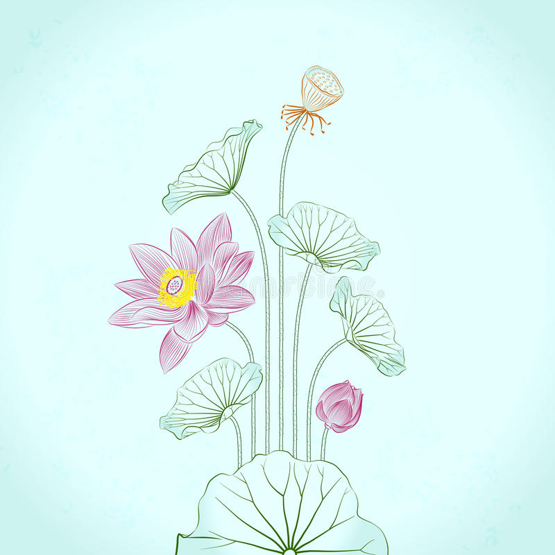 Lotus Painting with line drawing stock photo