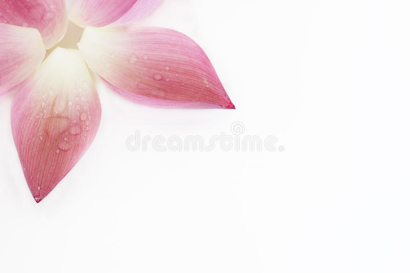Download Lotus petal collection stock image. Image of chinese - 26526049