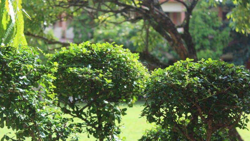 Lotus Plant fotografia stock