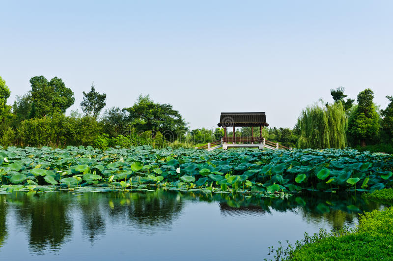 Download Lotus pond stock photo. Image of landscape, enjoy, nobody - 28803664