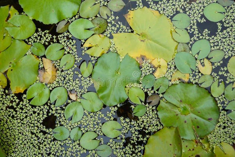 Lotus Pond fotografía de archivo libre de regalías
