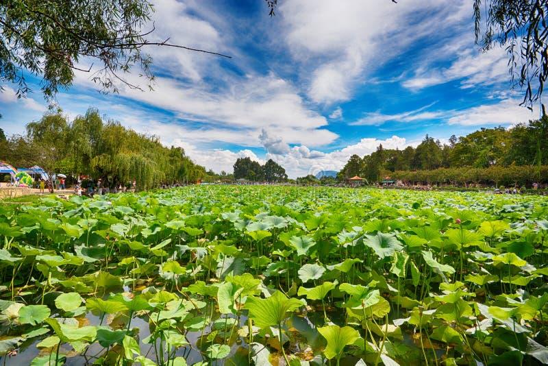 Lotus Pond imagens de stock