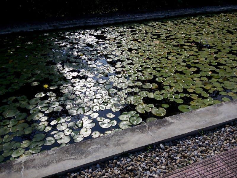 Lotus Pond stock afbeelding