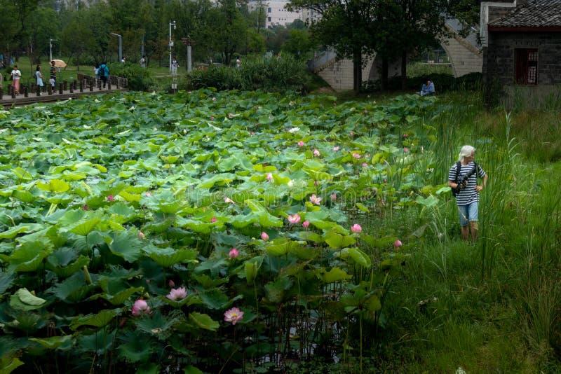 Lotus Pond-Nanchang le gusta el parque del humedal del lago imagen de archivo libre de regalías