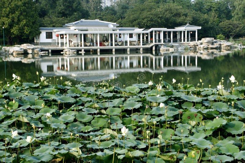 Lotus pool in September.